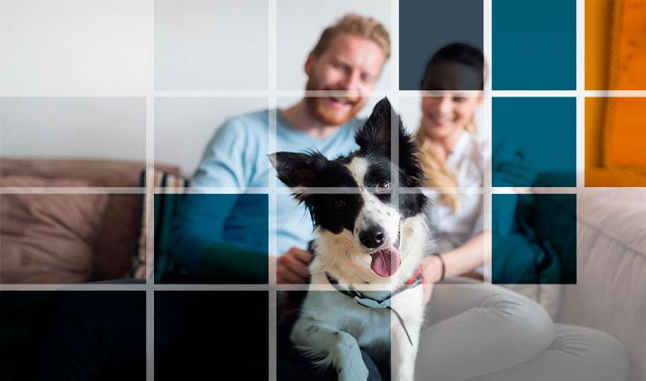 ¿Buscas casa y tienes mascotas? Tienes que leer esto